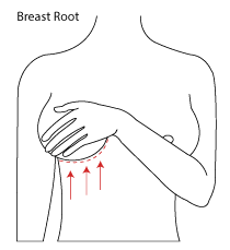9eb37746db733 graphic of breast root trace or inframammary crease for ordering large cup  bras